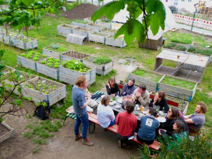 Regular workshops and excursions take place on the garden plots