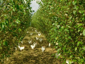 AGROFORESTRY: ADAPTING TO CHANGE
