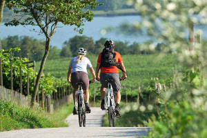 AGRICULTURAL PARKS: BARLEY, BEES AND BIKES